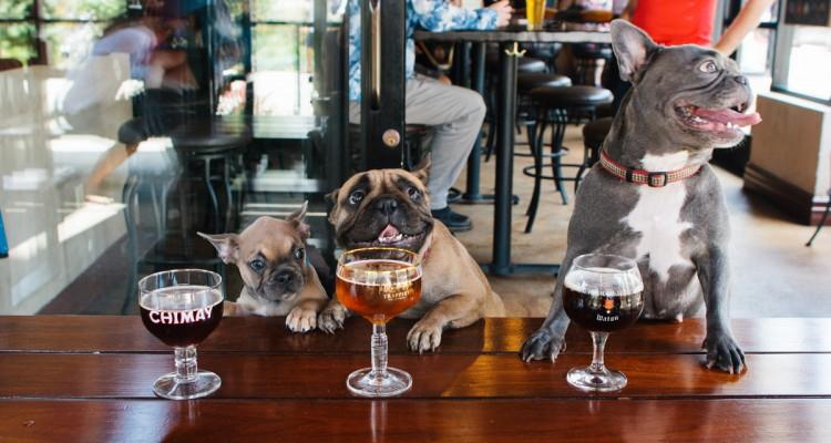 8 locales 'dogfriendly' para disfrutar con tu perro