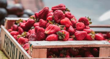 Llega la temporada de las fresas