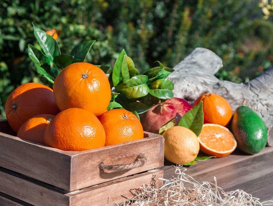 3 recetas con naranjas fáciles y deliciosas
